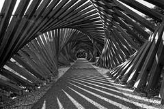 Jardin Mallet Stevens (J N Photography) Tags: jeremynuyten sonya77 dt1650mmf28ssm noirblanc noiretblanc blackwhite blackandwhite monochrome contrast streetphotography streetart urbanart urbanphotography architecture wood ombre shadow light