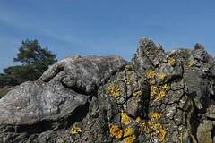 Planet of the apes (nordelch61) Tags: hessen wetterau münzenberg blüten baumblüten obstbäume bäume frühling ast äste fels felsen flechten
