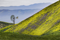 Made in the USA (pixelmama) Tags: april2017 blm bureauoflandmanagement california carrizoplain carrizoplainnationalmonument pixelmama sanluisobispocounty santamargarita spring superbloom trackthebloom wildflowers aermotorwindmill madeintheusa temblorrange hwy58