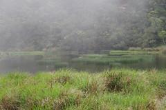 IMGP0425 (gibbyli) Tags: pentax ks2 18135mmwr 南澳 宜蘭 金洋村 神祕湖 呂氏攀蜥 南澳闊葉樹林自然保留區 泰雅 鬼湖 南澳濕地 japalura luei