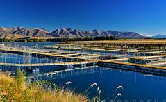 Salmon Farm (T Ξ Ξ J Ξ) Tags: newzealand mtcook d750 nikkor teeje nikon2470mmf28 day salmon farm farmland cook