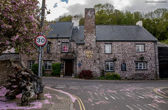 Falling blossom outside the Bell inn. (andyp178) Tags: thebell pub old building carving uskvalley blossom cherry tree spring caerleon wales