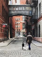 TriBeCa 2017   morning constitutional (Ryan Vaarsi) Tags: tribeca dogs streetphotography cobbles alley overpass bridge urbanarchitecture behindthescenes lowermanhattan vsco
