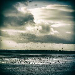 Aves / Birds (Francisco (PortoPortugal)) Tags: 0972017 20160305fpbo2548 aves birds riodouro riverdouro porto portugal portografiaassociaçãofotográficadoporto monochrome sky franciscooliveira