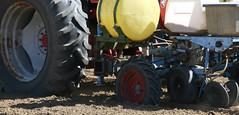 Peanut Planting 13 (UGA College of Ag & Environmental Sciences - OCCS) Tags: uga tifton campus peanuts planting