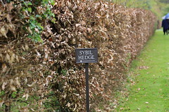 Sybil Hedge, Houghton Hall, Norfolk (Rockallpub) Tags: hedge ef24105mmf4 sybil canoneos6d 125 leaves shoots