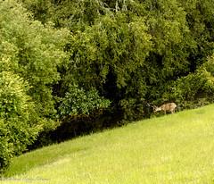 Monte Bello-15 (MohamedMM) Tags: hike montebello palo alto california nature mountains green