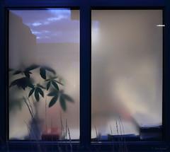 outside in (amazingstoker) Tags: basingstoke basingrad amazingstoke reflection transmission window glass plant pot office blue hour cloud sky voyeur evening