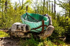 Lusen gläsernes Boot (Waupee08) Tags: forest bayern nationalpark woods natur bark karl wald bäume treestump copse bayerischerwald baumrinde lusen bloch bergwald baumstumpf waldsterben baumgruppe naturwald treearea waldgebiete karlbloch