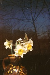flowers (brainsdown) Tags: trip sun house nature 35mm lights evening russia watch wakeup yashica 2013