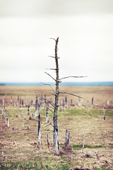 Deadwood (fazz33 (Chris)) Tags: wood tree canon dead bokeh mark ii 5d dslr halifax bokerama