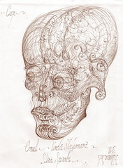 23 Human craniu vortex sfera embrion anatomia 2 pattern (kelemengabi) Tags: vortex gabriel standing spiral wave theory sphere helix universal resonance kelemen