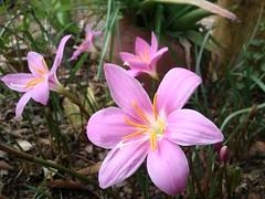 Nice flower in our garden