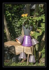 pots de fleurs X-E1_0720AA (mich53 - Thanks for 2300000 Views!) Tags: flowers portrait art fleurs garden natural jardin hibiscus fujinon banc dcoration hrisson poteries xe1 potsdefleurs borderfx xf60mmf2 4rmacro