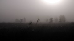 Im Gegenlicht; Tetenhusener Moor (18) (Chironius) Tags: schleswigholstein deutschland germany allemagne alemania germania  szlezwigholsztyn niemcy morgendmmerung morgengrauen  morgen morning dawn matin aube mattina alba ochtend dageraad  amanecer moor sumpf marsh peat bog sump bottoms swamp pantano turbera marais tourbire marcageuse nebel gegenlicht sonnenaufgang sunrise zonsopgang  morgens dmmerung fog brouillard niebla silhouette