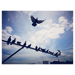 บินไปเกนจิ  #himorning