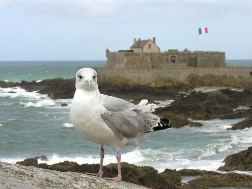 Reis Saint-Malo, 14-15-16 sept 2013
