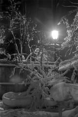 020569 03 (ndpa / s. lundeen, archivist) Tags: winter light blackandwhite bw house snow storm building 1969 film home lamp monochrome car boston night 35mm fence ma blackwhite backyard massachusetts branches nick snowstorm nighttime lamppost 1960s february snowfall blizzard parkedcar beaconhill snowcovered winterstorm dewolf heavysnow mtvernonsquare bigsnow coveredinsnow churchoftheadvent recordsnowfall recordsnow nickdewolf photographbynickdewolf 3mtvernonsquare