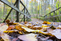 Autumn Bridge (J. Myers) Tags: park bridge justin autumn trees ohio wild color fall nature leaves yellow canon john leaf october glen foliage explore helen springs bryant 1740mm dayton myers f4l t2i
