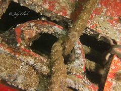IMG_4533 (jodylynn007) Tags: ocean canada canon underwater britishcolumbia scuba powershot pacificnorthwest scubadiving wreck pipeline sola britannia brittania lightmotion inon s95 inond2000 jodyclark inonucl165 nauticam canonpowershots95 fixhousing jodylynn007hotmailcom jodylynnclark