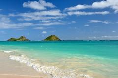 My Favorite Winter Scene (Pink Hibiscus) Tags: beach hawaii nikon oahu tropical fx bellows allrightsreserved d800 mokuluaislands copyrighted bellowsafs 2013 pinkhibiscus waimanalobay themokes