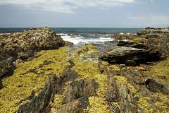 Barlings Beach, South Coast, Australia (Anna Calvert Photography) Tags: ocean sea seaweed rocks australia cliffs pacificocean southcoast waterpools barlingsbeach