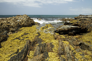 Barlings Beach, South Coast, Australia
