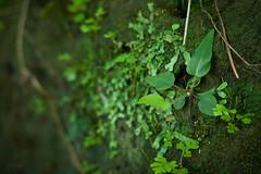 (Gabriel Grespan) Tags: nature relax 50mm peace natural natureza paz calma