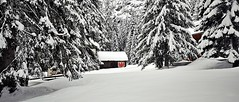 red eagle in the snow (Claudia Gaiotto) Tags: winter snow forest silence braies altoadige sudtirolo potd:country=it