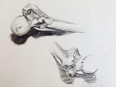 Femur (Vale M) Tags: blackandwhite monochrome pencil sketch drawing sketchbook anatomy bone hip femur charcoalpencil
