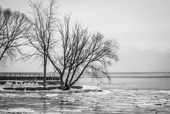 Now is the Winter of our Discontent... (KWPashuk) Tags: trees winter bw ontario canada ice water monochrome grey frozen nikon harbour bare shoreline d200 oakville bronte nikkor70300mm kwpashuk kevinpashuk
