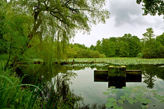 Thielenbruch Pond 1 | Germany (www.jacktheflipper.de) Tags: trees plants plant color tree green nature water colors creek germany landscape jack photography spring pond flipper thielenbruch