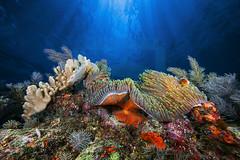 2013 12 BARATHIEU Mayotte 3610