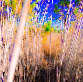 Mystical Marsh Path