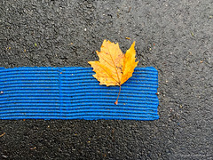 Golden leaf - 2 (Jürgen Kornstaedt) Tags: iphone asphalt 6plus colomiers occitanie france fr