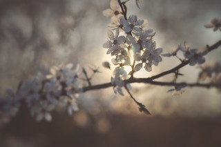 There is no glory in star or blossom till looked upon by a loving eye; There is no fragrance in April breezes till breathed with joy as they wander by. William C. Bryant