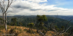 The High Country and the ski fields. (misty1925) Tags: dinnerplain mthotham skiresort victoria dargohighplains gumtrees eucalyptus panorama