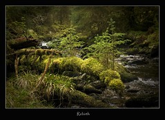 rebirth (tiggerpics2010) Tags: scotland nature westhighlands woodland moss mossy trees growth life green river