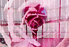 World Rose (Hayden_Williams) Tags: succulent plant flower garden nature pink rose planet globe earth person people view shadow silhouette indoors odaiba miraikan museum future doubleexposure dream dreamy multipleexposure canonae1 film analog analogue fd50mmf18 kodakportra400