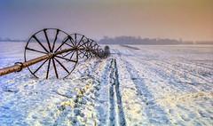 Out In The Field (dietmar-schwanitz) Tags: winter germany brandenburg birkenhain deutschland film nikoncoolscaniv schnee snow feld field minoltax700 lightroom dietmarschwanitz
