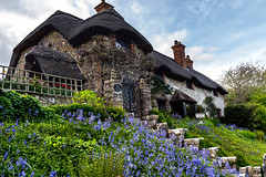 Hill Cottage (Simon Downham) Tags: godshill isleofwight cottage bluebells bluebell spring april 2017 hillcottage stone thatch thatched steps garden tulips flowers bloom blooms england unitedkingdom gb inexplore explore