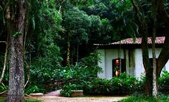 Little House (Mahmoud R Maheri) Tags: riodejaneiro brazil forest trees house hut residence