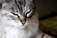 IMG_1369_S_1 (Pablo Alvarez Corredera) Tags: mundo rural mascota gato gata gatita dormi