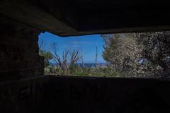 australian bush (Greg Rohan) Tags: sea tree sydney botany armybunker australianbush d7200 2017 photography australian bush army bunker