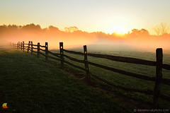 Foggy Knox Farm Meadow behind a Fence at Sunrise (DTD_0250) (masinka) Tags: foggy morning sunrise knox farm meadow fence eastaurora ny newyork roral countryside country fog light backlight intense outdoors landscape photography danielnovakphoto etbtsy westernnewyork wny 716 buffalo suburb