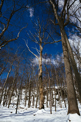 Catoctin Mountain [03.16.17] (Andrew H Wagner | AHWagner Photo) Tags: canon eos 5d3 1635l 1635mm f4 f4l is usm 5dmk3 5dmkiii 5dmarkiii 5dmark3 ultrawideangle wideangle nature trees tree landscape winter mountains valley sky blue snow frozen outdoors explore exploration exploring hiking catoctinmountainpark catoctin catoctinmountain maryland ice