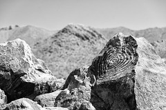 Petroglyphs (Plonq) Tags: arizona vacation travel mountain hill rocks petroglyphs