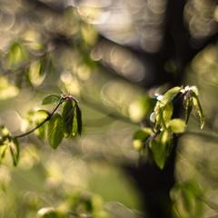 ♠ ♠ ♠ (cнαт-ɴoιr^^) Tags: 20170424imgp68212 frühling spring flora buchen grün green verde vert light licht lumere beech luce