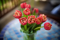 241/365 I am besotted with these tulips (fotovivo / peevish me) Tags: postaphotoaday 365 ontheporch tulips flowers spring springflowers depthoffield blur bouquet bokeh sonya7s voigtlandernoktonclassic40mm14 fotovivo
