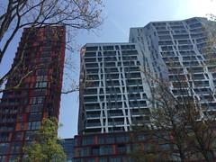 Buildings and flowering trees in Rotterdam (Annemarijs) Tags: gebouwen buildings offices kantoren